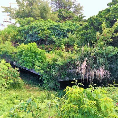 日本軍に破壊された橋「天願橋」
