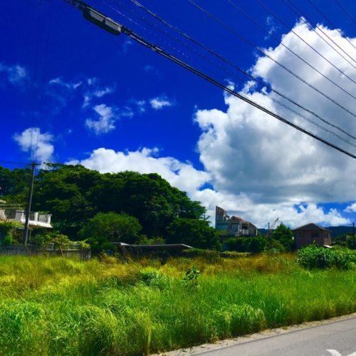 麻酔薬用のコカが栽培されていた「武田薬草園跡」